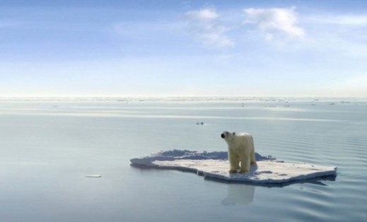 polar-bear-537x325